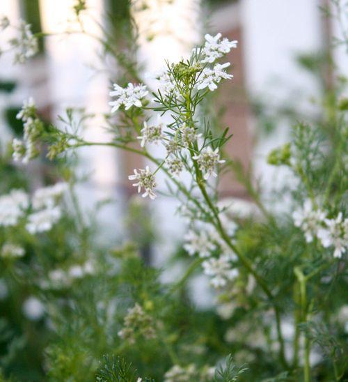 Garden616c