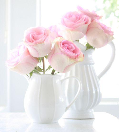 Rosesinwhite1