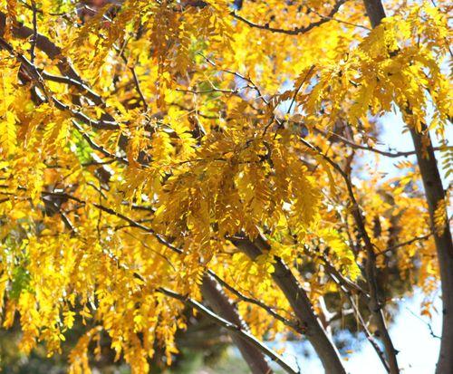 Autumn1106b